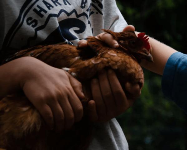 állatokról gondoskodni